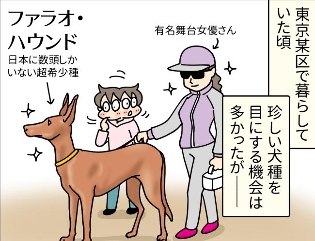 ファラオ・ハウンドを散歩させている有名女優さんと遭遇した東京在住時の大原由軌子