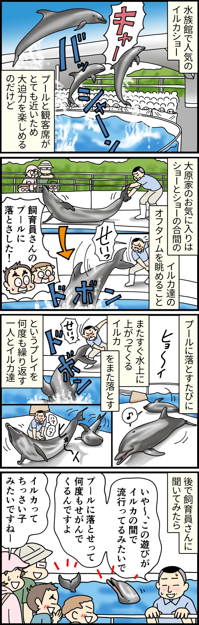 長崎県佐世保市の九十九島水族館海きららで飼育員さんと遊ぶイルカたち